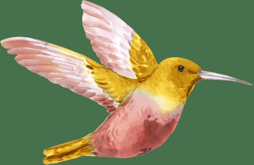 gelb, rosaner Kolibri als Aquarellzeichnung fliegt nach rechts